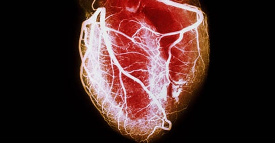Image result for Circulation for Heart Health